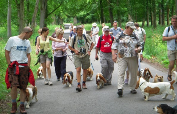Basset Hound Walkers at Savernake