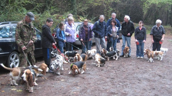 Basset Hound Walkers at start