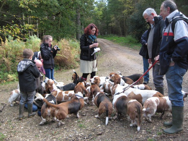Basset Hounds at Savernake