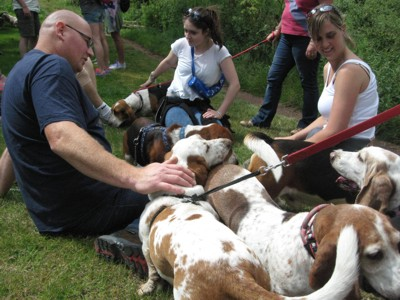 Tangle of Bassets
