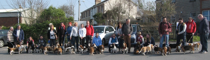 Bassets at Chudleigh
